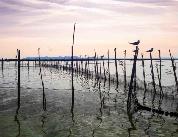 oiseaux-parc-naturel-albufera-valence