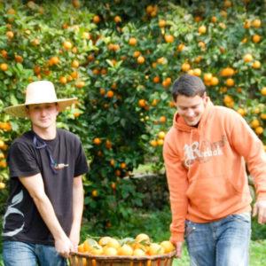 Orange experience in Soller in Mallorca