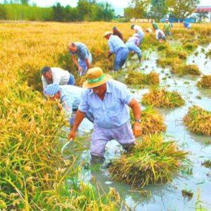 Private tour in the rice fields in Delta del Ebro in Catalonia