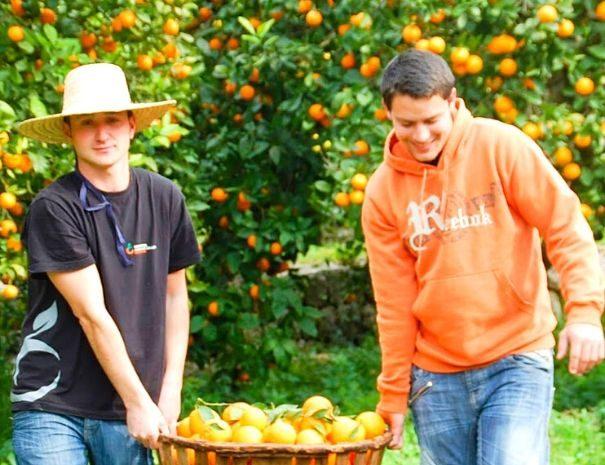 Activité Team building dans une orangeraie à Majorque