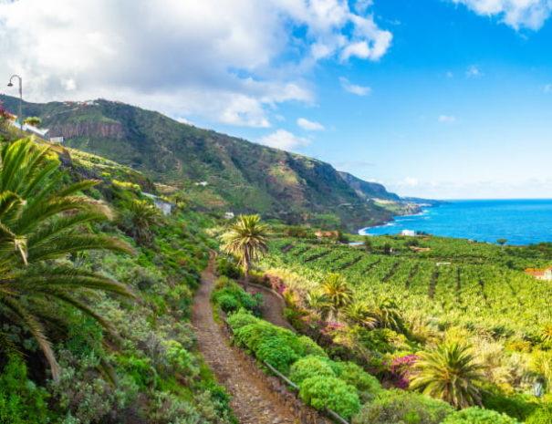 Vue Tenerife
