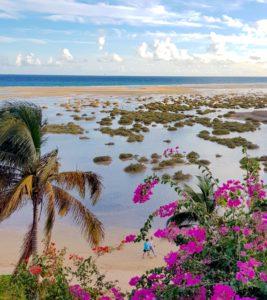 Árbol y playa en Fuerteventura